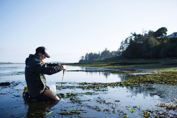 (Photo by Toni Greaves) COOS BAY, OREGON – May 20, 2019: Caitlin Magel spends the early morning monitoring an eelgrass bed at South Slough National Estuarine Reserve near Coos Bay, Oregon.